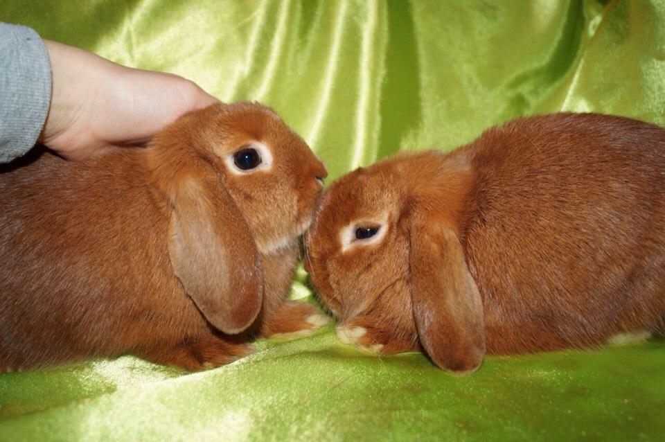 Друзья кролики